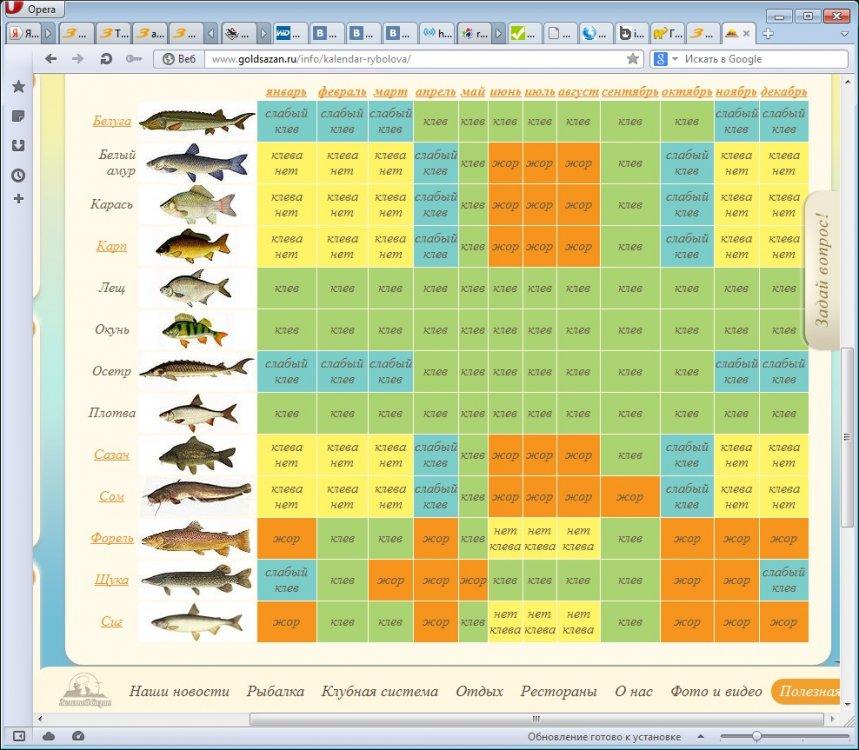 Прогноз клева рыбы на томи в юрге