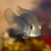 Лицо_Рыбы